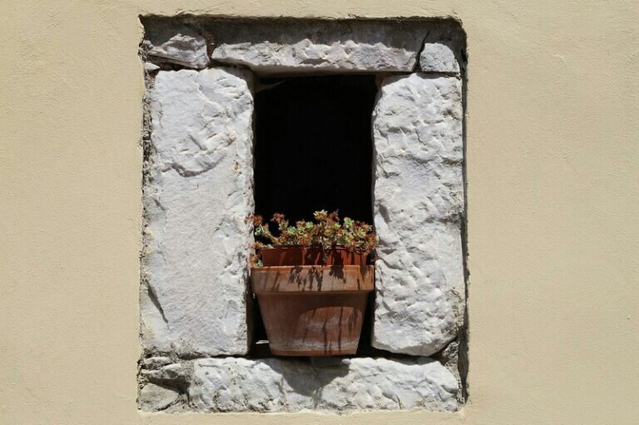 potted Nature_collection Hi Italy Italien Blumentopf New Yellow Haus