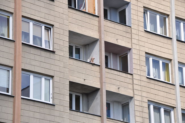 Apartment Architecture Balcony Building Built Structure Dog Plushy Residential Building Residential Structure Strange Toy Weird WTF WTF!?