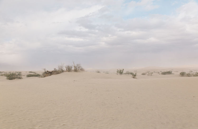 Arid Climate Arid Landscape Beauty In Nature Day Death Valley Death Valley National Park Desert Dunes Landscape Nature No People Outdoors Sand Sand Dune Sand Storm Scenics Sky Storm Tranquil Scene Tranquility Tree