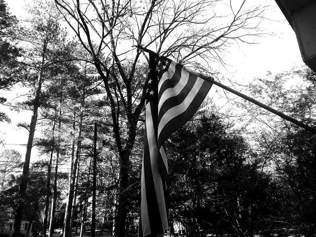 Patriotism Flag Low Angle View Cultures No People Striped Tree Stars And Stripes Outdoors Day Sky Selective Focus Full Frame Tree Trunk Sunny Branch Tranquil Scene Sunlight WoodLand Silhouette Plant Tranquility Softness Cloud - Sky Detail