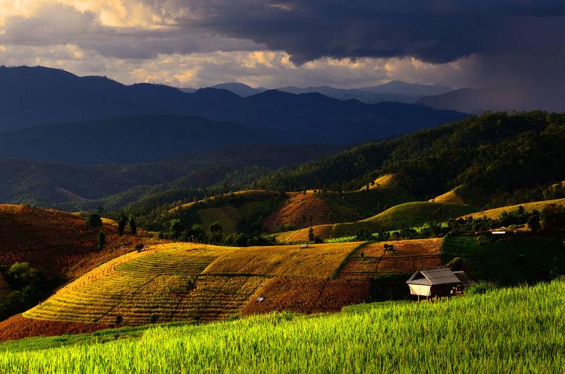 High angle view of vineyard