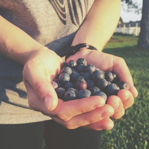 Midsection of person holding blueberries on field during sunny day