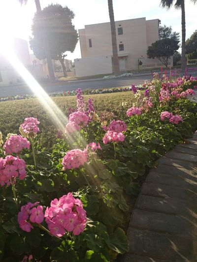 How's The Weather Today? Taking Photos Bestshot Dhahran Flowers Love Month Of February