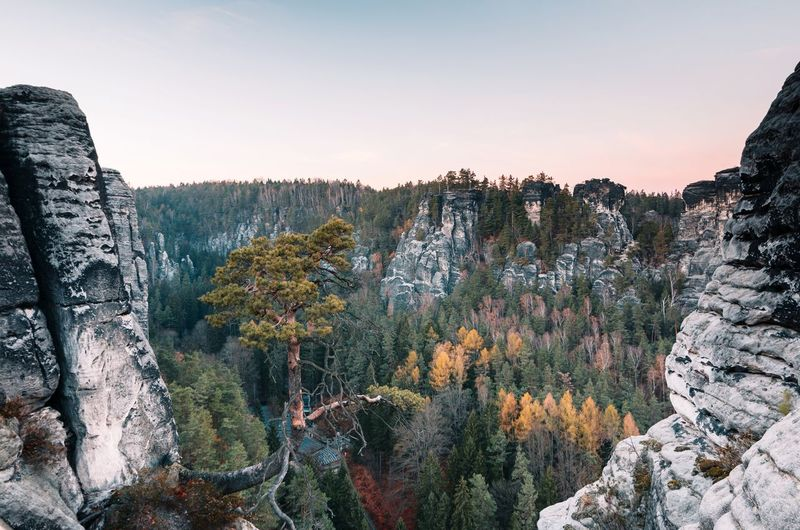 Look at the tree 🌴😀 Travel Herbst Adventure Outdoors Outdoor Photography Landscapephotography Autumn Natur Nature Traveler Fall Landscapes Hiking Explorer Countryside EyeEm Selects Mountains Germany Earth Traveling Tree Sunset Mountain Pinaceae Pine Tree Winter Multi Colored Sky Landscape Hiker