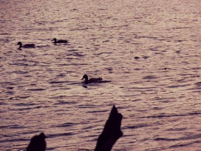 Outside Lake Ducks EyeEm Best Shots