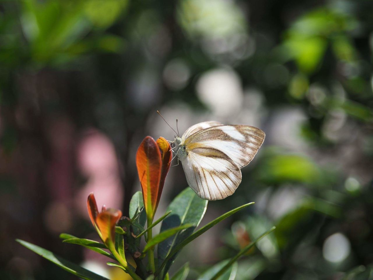 insect, animals in the wild, one animal, animal themes, nature, butterfly - insect, focus on foreground, plant, no people, close-up, animal wildlife, fragility, outdoors, day, flower, growth, freshness, pollination, beauty in nature, perching, flower head