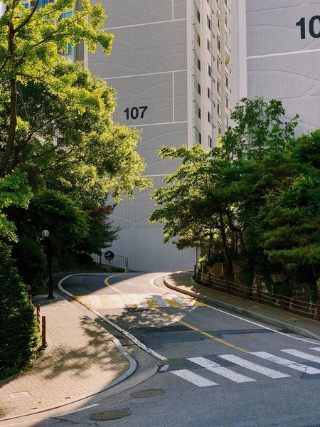 Plant Tree Architecture Building Exterior Built Structure Day Nature Building Street Growth