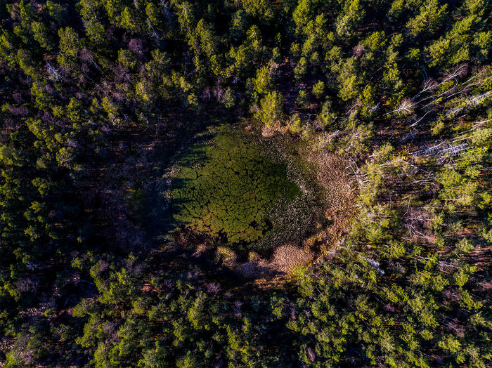 The hidden lake A Bird's Eye View Beauty In Nature Dronephotography Green Color Lake Nature No People Non-urban Scene Outdoors Scenics Sunset Sweden Sweden Nature Tranquil Scene Tranquility Tree Wilderness WoodLand