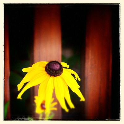 Guten Morgen, Freunde! Es ist Mittwoch und die Woche rollt bergab ;) - Habt einen schönen Tag und genießt die Sonne! #iceworx #berlin #yellow #flower #sunlight #photocommunity #mostphotos IGDaily Instago Berlin Tweegram Summer Statigram Sun Instagramhub Flower Webstagram Beautiful Instadaily Photo Instalike Sunlight Igersberlin Yellow Instaphoto Photooftheday Igersgermany Picoftheday Iceworx All_shots Lifeasphoto Instamood Photocommunity Bestoftheday Mostphotos Igers