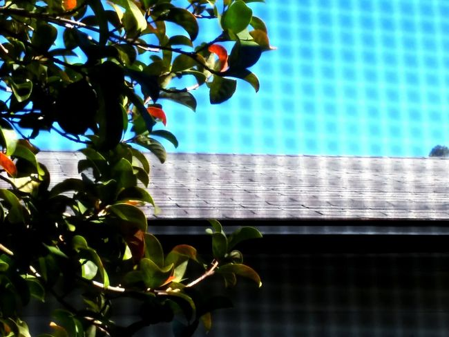 Up on a rooftop. Outdoors Day Pattern Pieces Looking Through Window Window Screen Roof Tile Building Exterior Tree Leaves Sky Things I See From My Point Of View Orlando