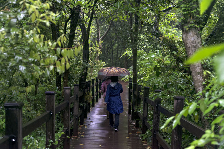 rainy day of Bijarim which is a famous forest in Jeju Island, South Korea Adult Adults Only Beauty In Nature Bijarim Casual Clothing Day Forest Full Length Growth JEJU ISLAND  Leisure Activity Lifestyles Nature One Person Outdoors Pathway People Rainy Real People Rear View Tree Walking Women