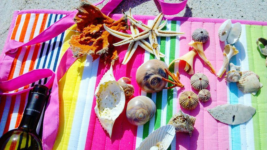 Multi Colored No People Day Outdoors Close-up East Coast USA South Carolina Shell Perfect Shell Sea Life Beauty And The Beach Beach Photography Landscape Beach Treasure Gift Collections Seaside Treasures In The Sea Perfect Shells Beauty In Nature Nature Shore Beach Day Sea Treasures