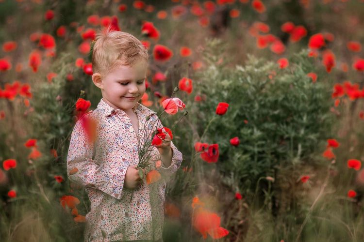 Cute boy standing on red flowering plants