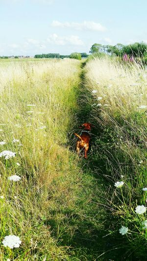 Nature On Your Doorstep Just Walking I Love My Dog Summertime