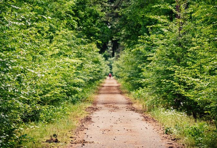 Running on a lonely forest track 3XSPUnity Adventure Beauty In Nature Day EyeEm Best Shots EyeEm Gallery EyeEm Nature Lover Footpath Forest Grass Green Color Hiking Nature One Person Outdoors People Plant Rear View Sommergefühle Sport The Way Forward Tree Walking
