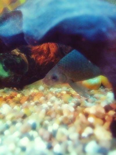 Feuerschwanz UnderSea Sea Life Underwater Sea Close-up
