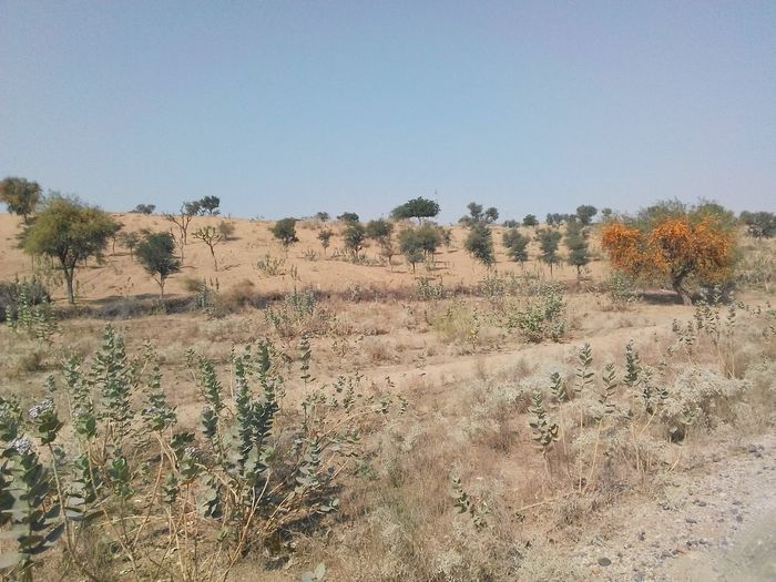 Landscape in Rajasthan India Landscape_photography Desert Landscape Village Life Village View Desrt Scenes Village Photography Trees Colourful Rajasthan Desert Life Nature Desert Landscape Tree Arid Climate Heat - Temperature Day Outdoors Sand Beauty In Nature No People Sand Dune