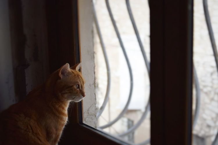 Animal Animal Head  Cat Cat Lover Cat Lovers Catoftheday Cats Cats Of EyeEm Cats 🐱 Catsoftheworld Cat♡ Curiosity Domestic Animals Domestic Cat Home Home Interior House Indoors  Looking Away Looking Through Window One Animal Pets Relaxation Sitting Window
