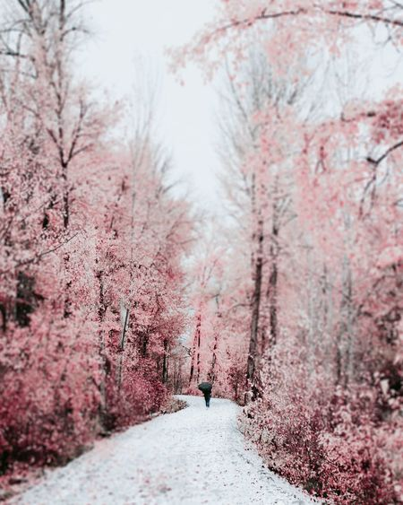 Rear view of woman walking on snow covered footpath amidst trees during winter
