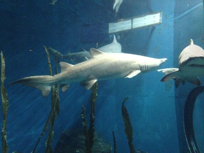 Shark in water Blue Close-up Day Fish Nature No People Ocean Sea Sharks White