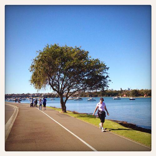 Bay Run track in Drummoyne, in inner suburbs of Sydney Sunshine Iphone 5 Walking
