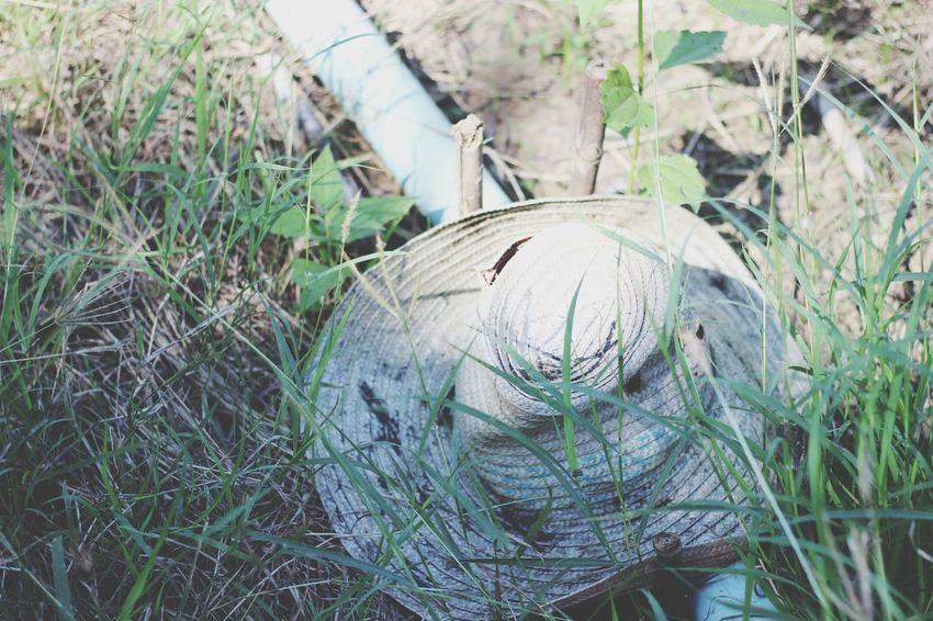 หมวก ใช่ว่าจะอยู่แต่บนหัว Grass High Angle View Growth Outdoors Nature No People Day Green Color Animal Themes Tree Beauty In Nature Close-up หมวก Hat สิ่งของ ทอดทิ้ง Alone Lifestyles