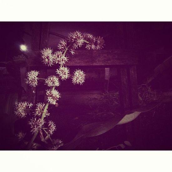 วาสนาออกดอก😘Goodnight Garden Home Keepmoving Bangkok Thailand Nightlight