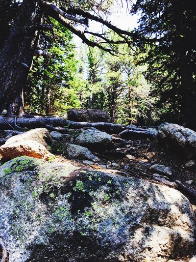 Tree Nature Rock - Object Forest Day Tranquility Outdoors No People Tranquil Scene Beauty In Nature Moss Growth Scenics Sky Rosevelt National Forest Colorado