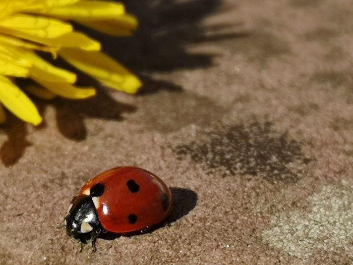 High angle view of ladybug on flower