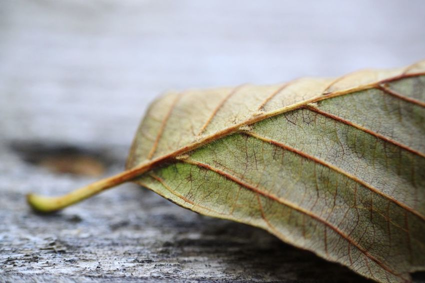 Leaf EyeEm Selects Leaf Close-up Fall Leaves Fallen Autumn Autumn Collection Plant Life Petal