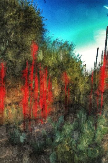Desert Botanical Garden Chihuly | In The Garden ✨ NEM Painterly Abstract