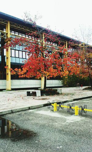 Tree Autumn Colors