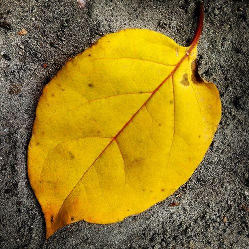 Outono é sempre igual 🍂 Outono Eyeem Europa Oficial© First Eyeem Photo