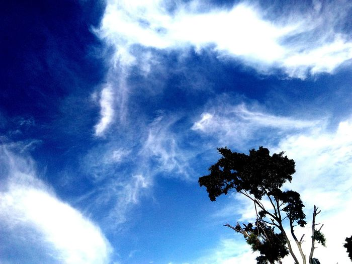 Tree Sky Blue Cloud - Sky Day Nature Palm Tree No People Outdoors Beauty In Nature