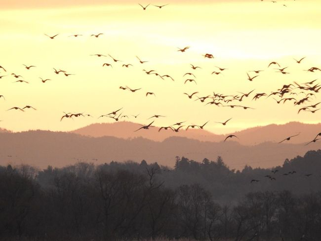 izunuma 伊豆沼物語0107 Bird Sky Nature Lake Landscape Sunrise
