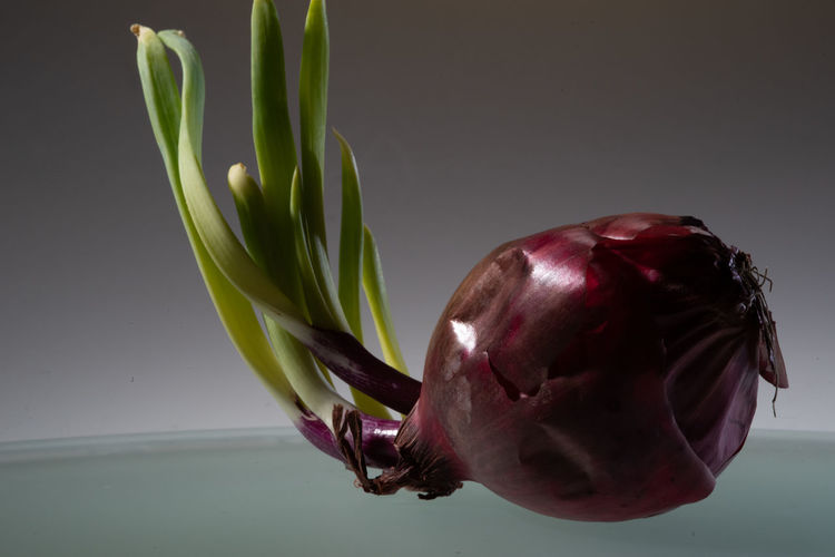 Onion: Focus Stacking Freshness Close-up Indoors  Food And Drink No People Vegetable Food Wellbeing Healthy Eating Studio Shot Plant Still Life Gray Background Onion Gray Nature Red Raw Food Purple Focus Stacking