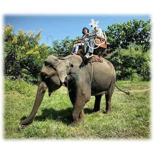 🐘 お早うございます🎶😃 Goodmorning🎶(* ´ ▽ ` *)ノ * 曇ってます☁( 28 ºc)We cloudy * 2011 チェンマイの思い出🎶😉 2011 Chiang Mai of memories🎶😉 * 外出したがらないM君と象ツアーにて * 野を越え 山を越え川を渡り 上下、左右、前後にいっぱい揺られ (天然のマッサージ効果) 時には象さんの餌を買わされ モンキーバナナ3束にサトウキビ3束 まだまだ足りずに草をむしり食べなが ら前進してました。 楽しかったですよ😸もちろんM君も楽 しんでいました。カメラを落とし、無 くしてしまってましたが😨 * チェンマイ 象 思い出 Chiangmai Memories Elephant Landscape Eyeemnaturelover Relax Nature