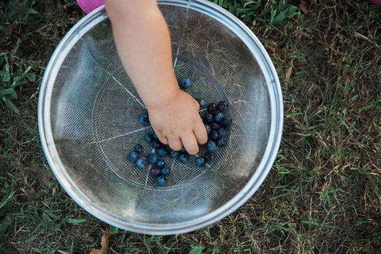 Cropped hand picking blueberry from colander