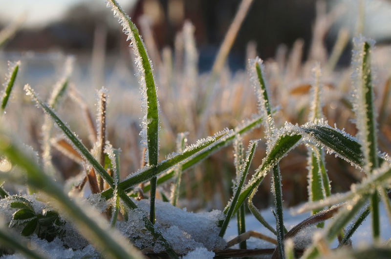 Atumn Colors Autumn Freshness Frost Grass Low Angle View Winter Beauty In Nature Close-up Day Fragility Freshness Green Color Growth Nature No People Outdoors Plant