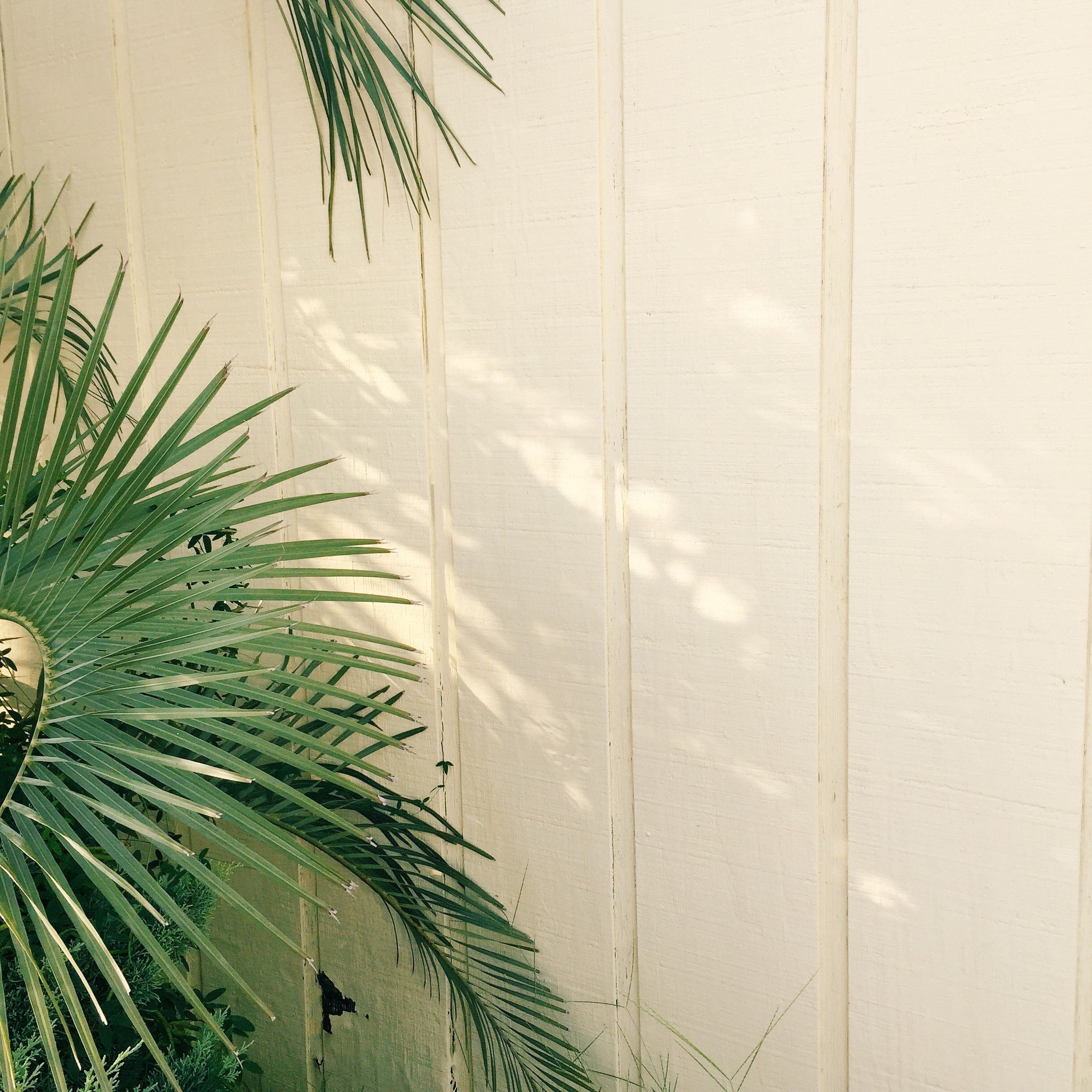 palm tree, growth, green color, plant, wall - building feature, indoors, leaf, nature, built structure, palm leaf, no people, day, wall, close-up, pattern, potted plant, architecture, high angle view, backgrounds