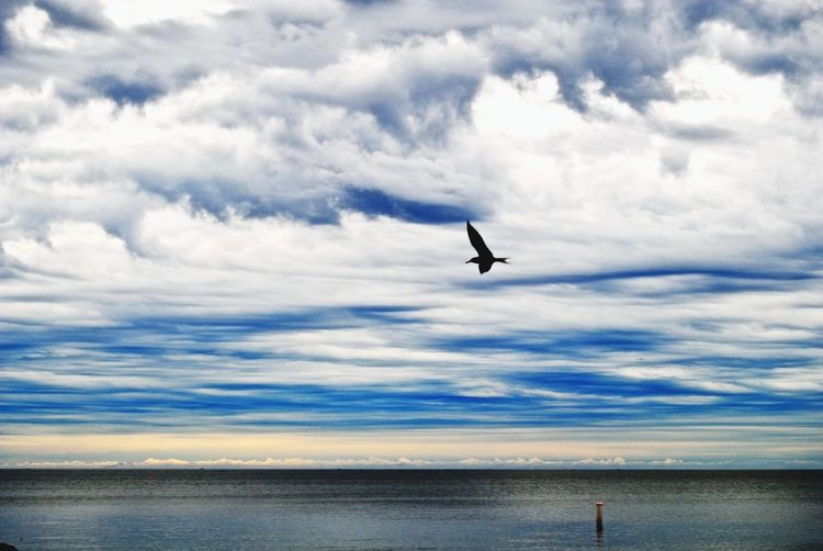 View of a bird flying over calm sea