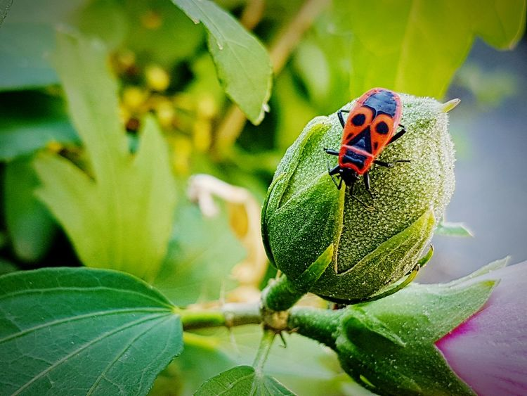 Maximum Closeness Green Color Nature One Animal Animal Wildlife Animal Themes Leaf Animals In The Wild Plant Close-up Day No People Outdoors Beauty In Nature Delicate Beauty Ecosystem  Pattern Red And Black Insect Flower Bud Close Up
