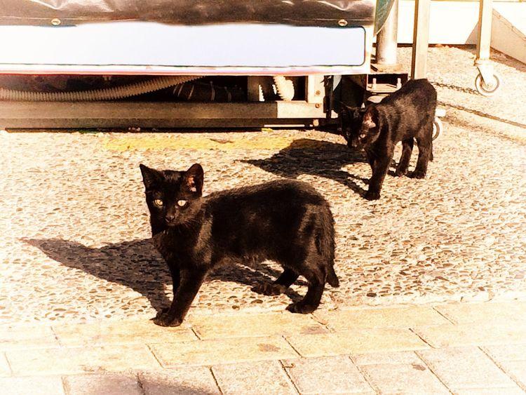 Cat Kitten Black Kitten Black Black Cat Two Mammal Pets Domestic Cat Animals Stray Cat Street Cat No People Feline Outdoors Street Stray