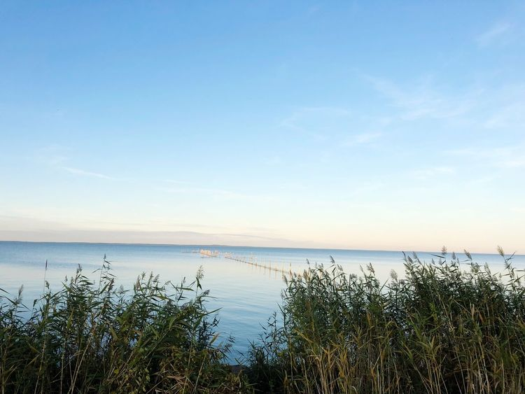 Water Sky Sea Beauty In Nature Scenics - Nature Tranquility Tranquil Scene Horizon Over Water Nature Horizon No People Plant Idyllic Non-urban Scene Beach Day Blue Growth Outdoors Marram Grass