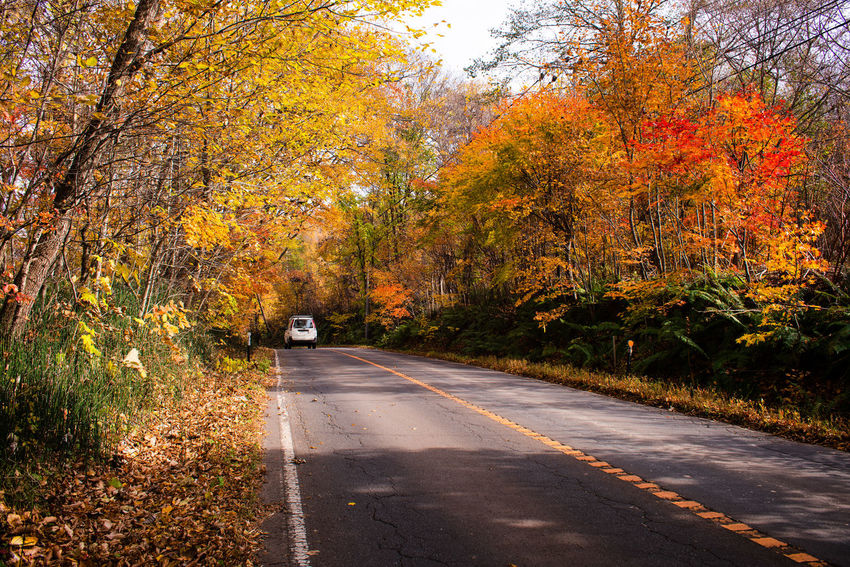 Car running on road towards forest in Autumn Autumn Tree Direction Road Transportation The Way Forward Plant Nature Beauty In Nature Tranquility Orange Color Outdoors Japan Hokkaido Drive Self-driving Van Sapporo Autumn colors Travel Tourism Transportation