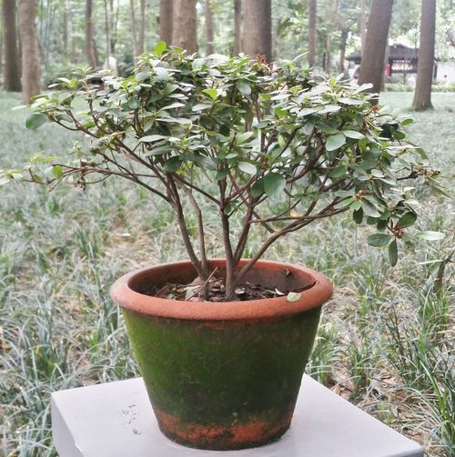 Fine Art Photography Potted Plant Small Pot With Plant Small Tree Chengdu China Sichuan Showcase July