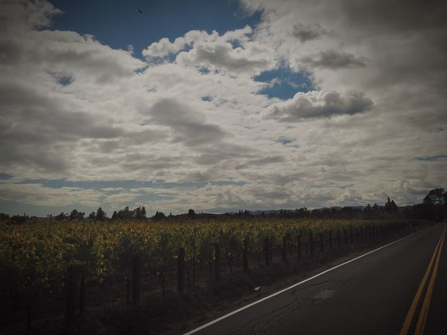 First picture on here Napa Valley Grapes Winecountry Hometown Longroad Countr First Eyeem Photo