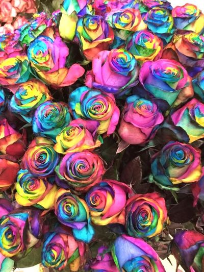 Promoflor Roses Overtherainbow Taking Photos Flower Collection Eyem Best Shots