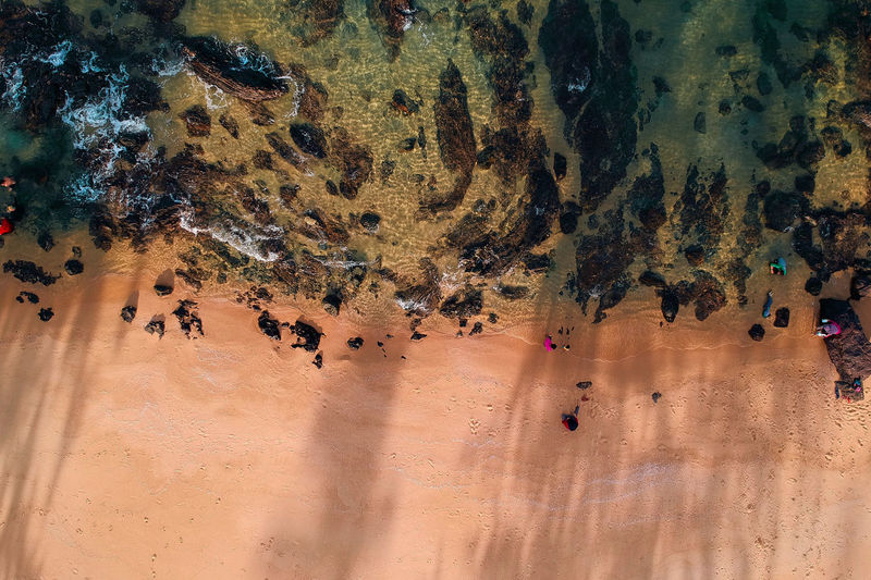 Land Group Of People Sand High Angle View Real People Crowd Large Group Of People Nature Large Group Of Animals Day Environment Rock Group Of Animals Outdoors Desert Motion Solid