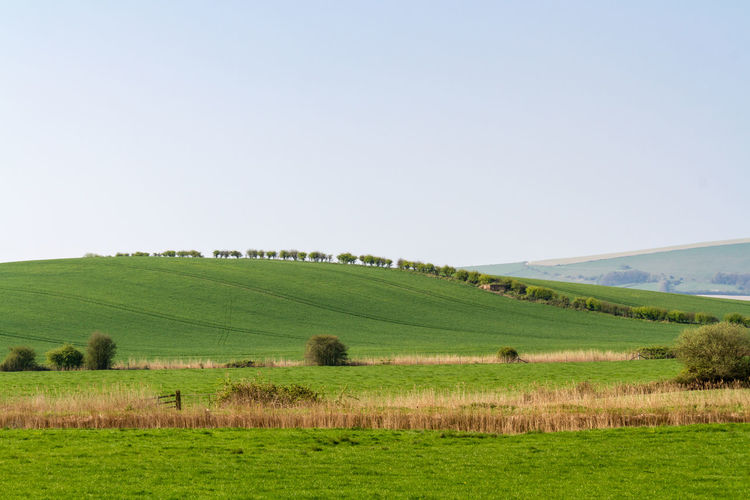 South Downs Landscape Agriculture Beauty In Nature Clear Sky Day Farm Field Grass Landscape Lewes Nature No People Outdoors Rural Scene Scenics Sky South Downs Sussex Tranquil Scene Tranquility